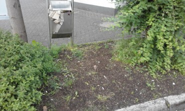 Vorher! Nachher!  – SPD Aktion Beetpflege am ZOB und Rathaus verbessert ein wenig das Stadtbild
